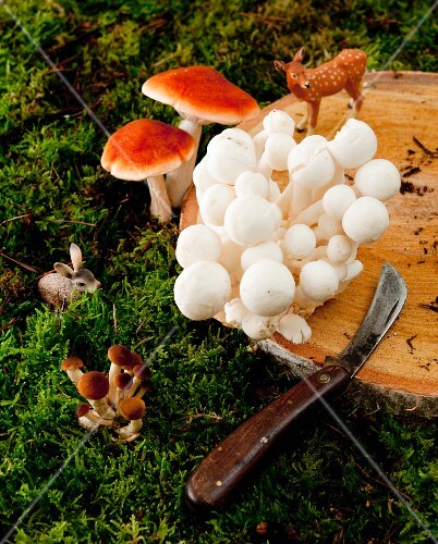 Wild mushrooms and animal figurines on a wooden board