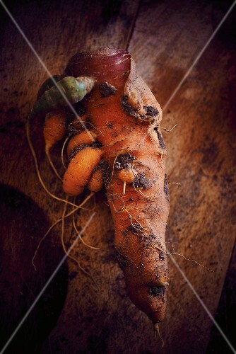 Organic carrots with soil
