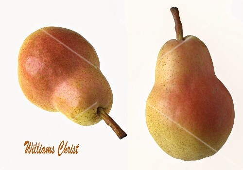Two Williams Christ pears on a white surface