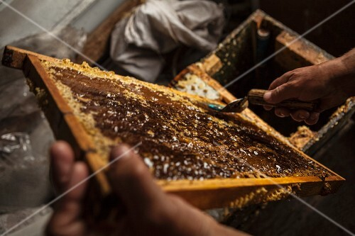 A beekeeper with honeycombs at a beehive
