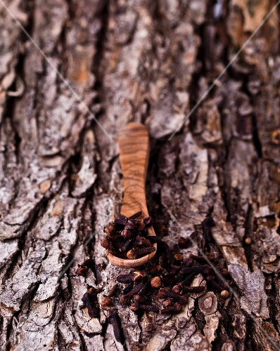 Cloves with a wooden spoon on a piece of bark