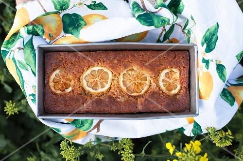 Lemon cake in a baking tin