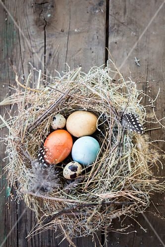 Various eggs in a nest made of straw and feathers
