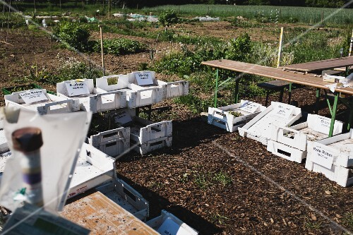 A garden plot with empty vegetable crate and picnic tables in the foreground