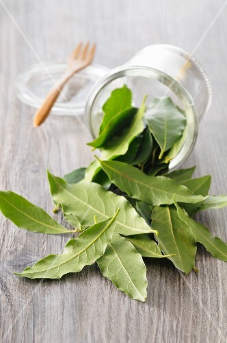 Fresh bay leaves falling from a glass