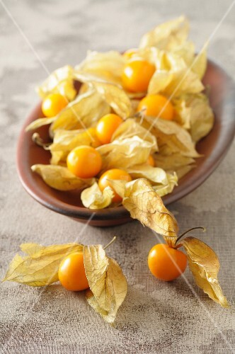Physalis in a ceramic bowl