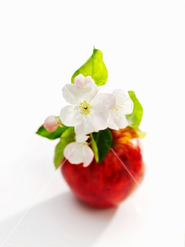 Apple with apple blossom