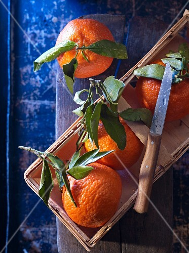 Four clementines with leaves and a knife in a wooden basket