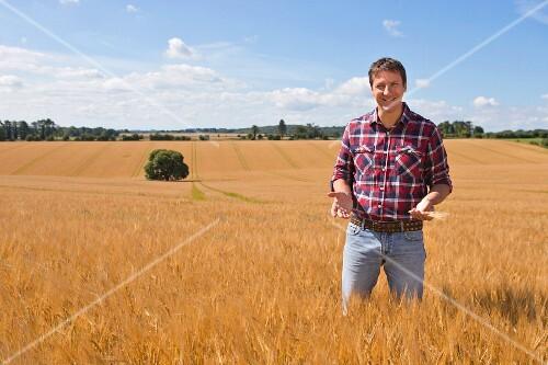 A farmer standing in a summer cornfield