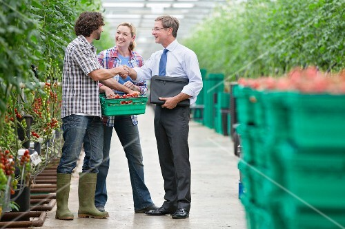 A businessman with agricultural producers in a sales meeting in a tomato greenhouse