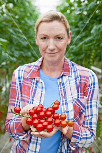 An agricultural producer presenting ripe vine tomatoes