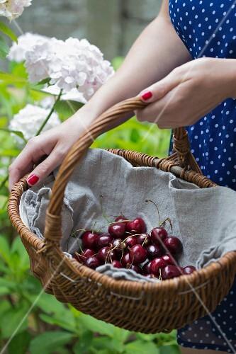 Woman holding basket of cherries