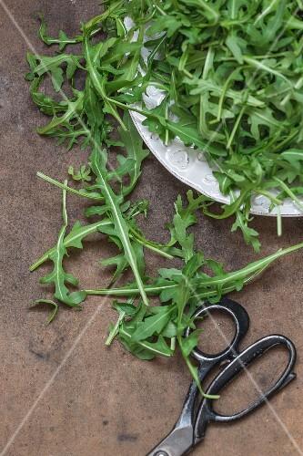 Freshly cut rocket leaves