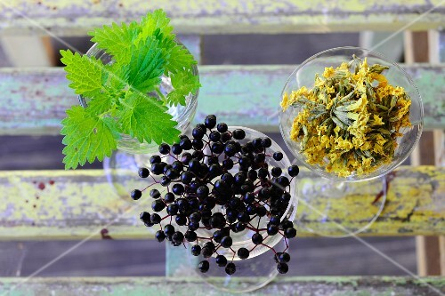 Fresh stinging nettles, elderberries and dried flowers