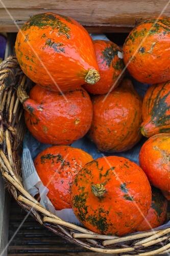Organic Hokkaido pumpkins in a basket