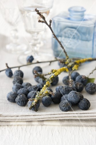 Sloes with a twig