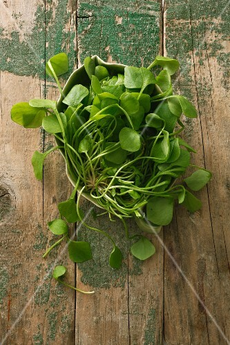 Purslane on a wooden surface