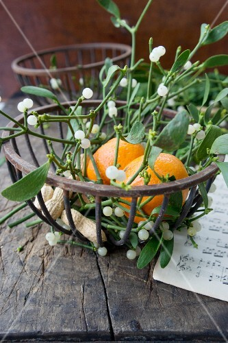 Sprigs of mistletoe and tangerine in metal basket (festive)