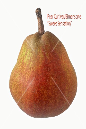 A Sweet Sensation pear