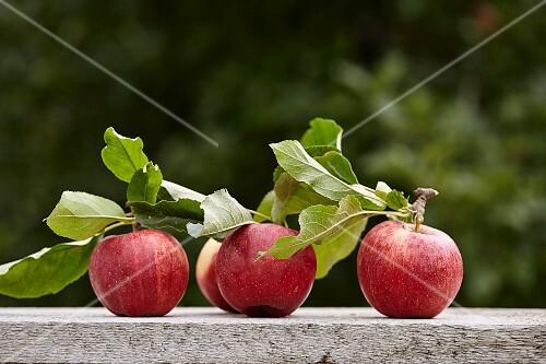 Freshly harvested apples