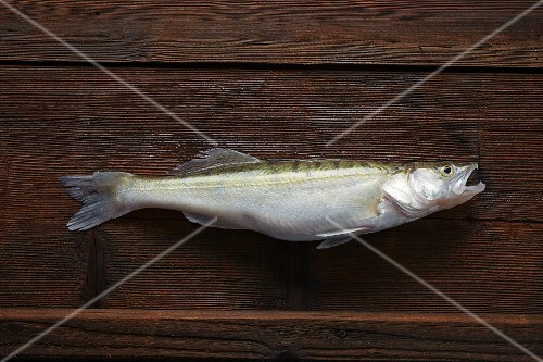 A freshly caught zander on a wooden board
