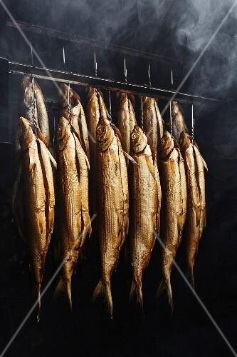Whitefish in a smoking chamber