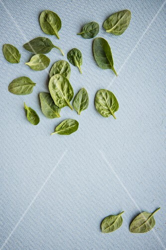Fresh spinach leaves (seen from above)