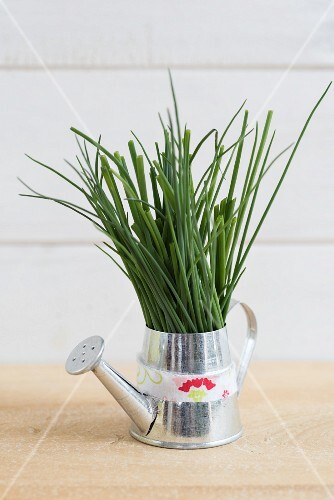 Chives in a small watering can