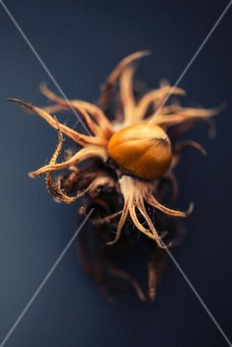 A hazelnut with an opened shell