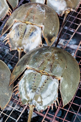 Horseshoe crabs on a grill, Thailand