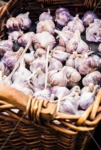 Bulbs of garlic in a large basket