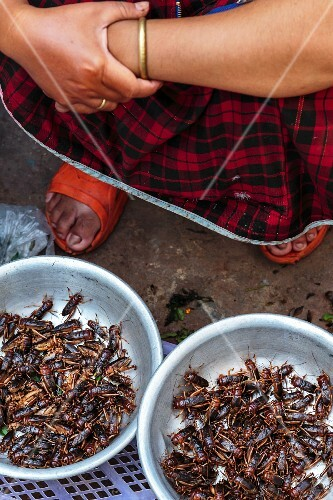 Market seller with live grasshoppers, Vientiane, Laos