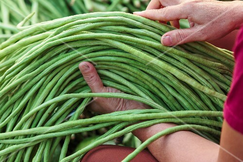 A woman with yardlong beans at a market Vientiane, Laos