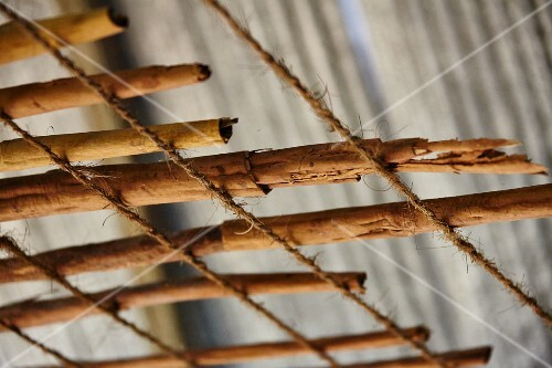 Cinnamon sticks drying (Sri Lanka)