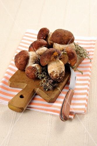 Fresh porcini mushrooms on a chopping board