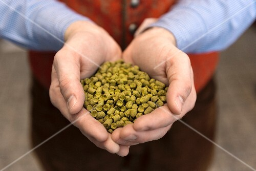 A handful of hops pellets