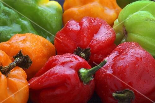Colourful Scotch Bonnet chilli peppers