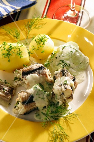 Berlin style eel with salted potatoes and cucumber salad