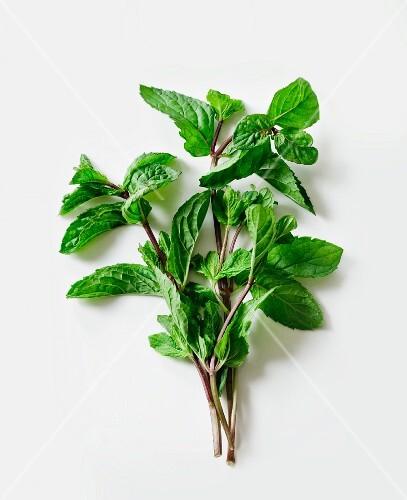Sprigs of fresh mint
