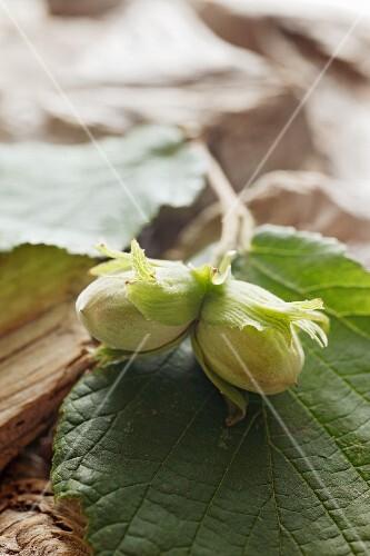 Hazelnuts with a leaf