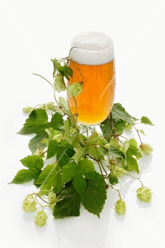 A glass of beer and a hops umbel