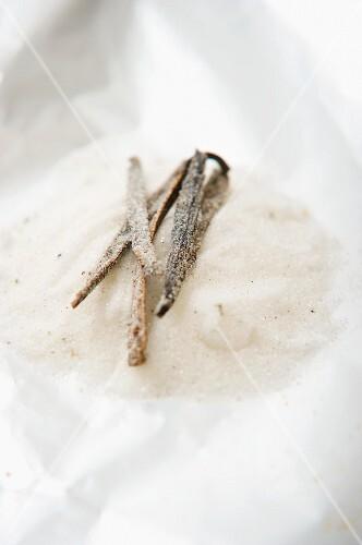 A vanilla pod in vanilla sugar