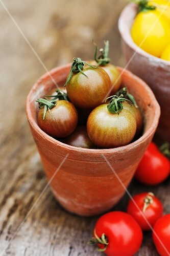 Red tomatoes next to Black Cherry tomatoes in a terracotta pot