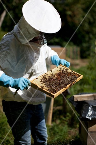 A bee-keeper with a honeycomb