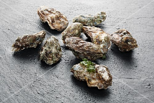 Several fresh oysters on slate