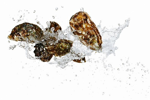 Fresh oysters with a water splash