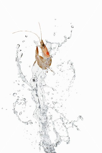 Prawn and water