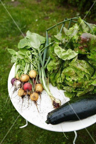 Radishes, spring onions, lettuce, zucchini on a table in the garden