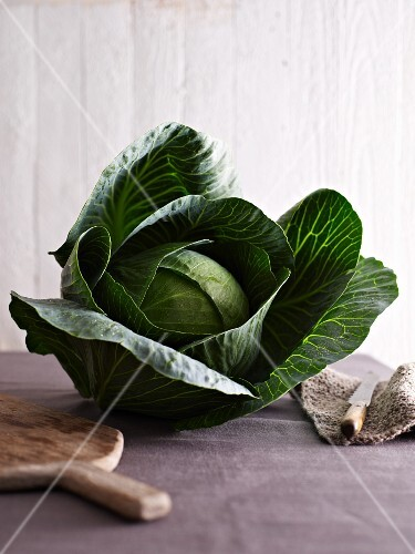 A whole white cabbage