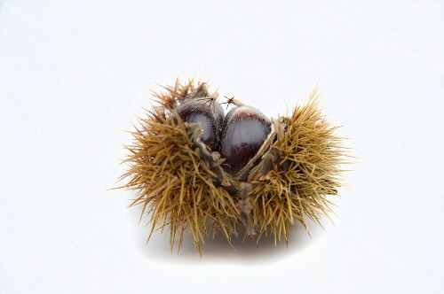 Sweet chestnut with open case